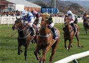 racehorse-retires